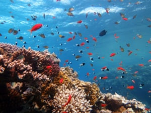 Fish swim in the waters of the Egyptian resort of Sharm el-Sheikh