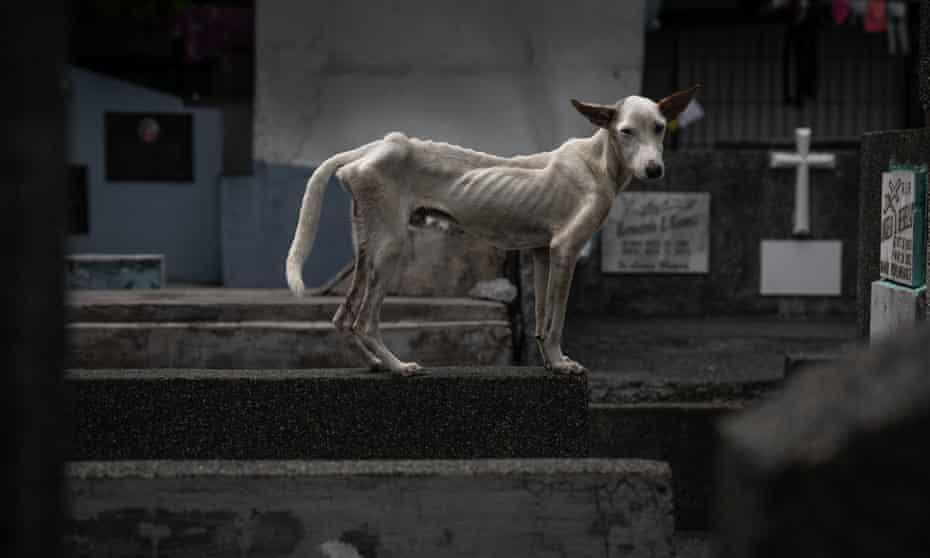 یک سگ لاغر در میان سنگ قبرها ایستاده است