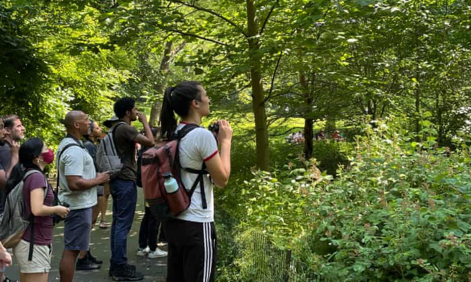 Bird watchers in Central Park.