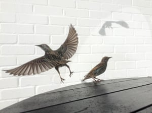 David Craik from Surrey, United Kingdom took second place capturing birds eating crumbs from a cafe table.