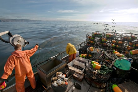 Crabbers check on a crab pot immersed in the waters of Bodega Bay, California.
