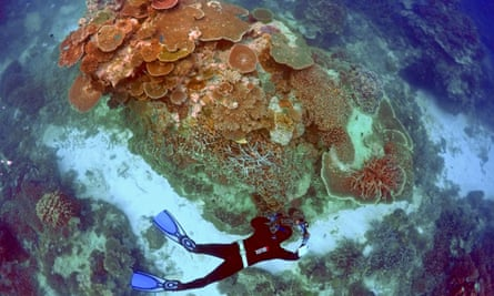 Oliver Lanyon takes photographs and notes during an inspection of the reef's condition in an area called the 'Coral Gardens' located at Lady Elliot Island