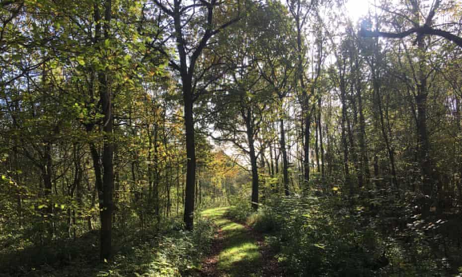 Wolford Wood,Warwickshire