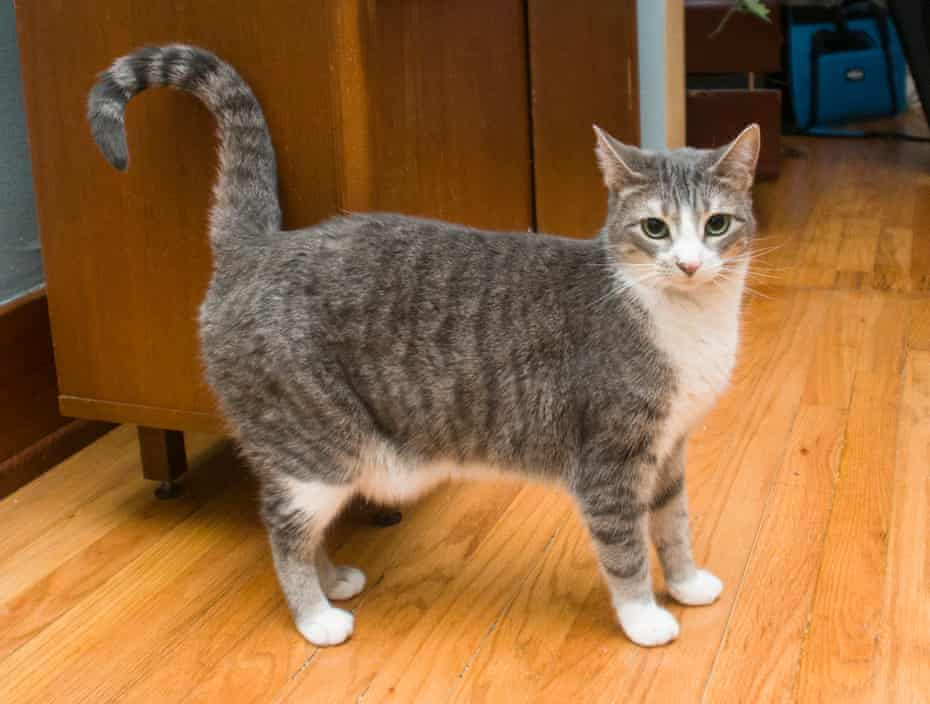 Tom Perkins' cat Ling-Ling, whose blood contained PFAS chemicals.