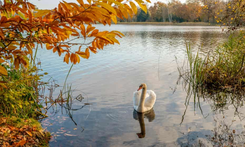 Autumn at Virginia Water Lake Virginia Water Surrey England, UK.