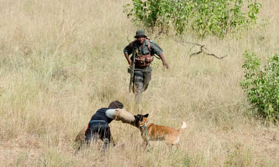 Anti-poaching tracking dogs in Kruger national park
