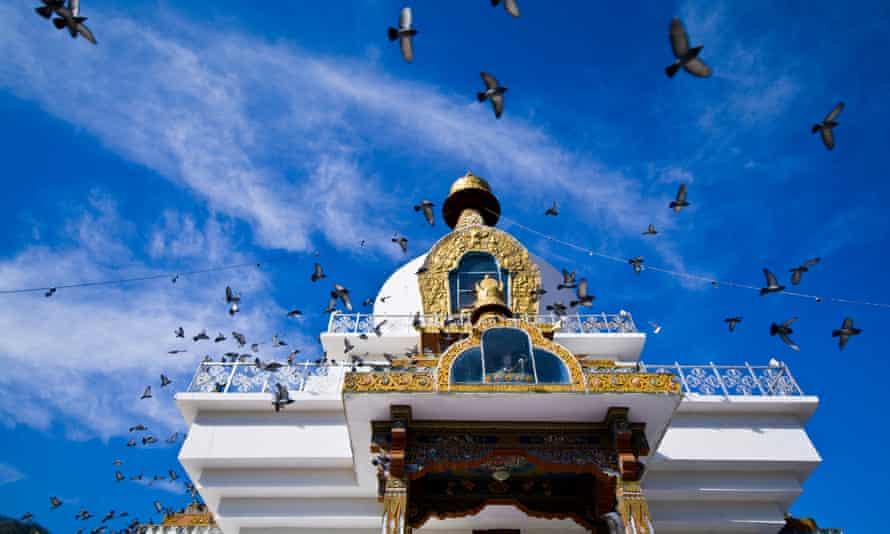 A flock of pigeons circle the golden spire of the Memorial Chorten beneath a blue sky.Thimphu Memorial Chorten, Thimphu Bhutan.