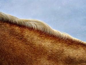 Elizabeth Burns United States 2nd Place – Animals | Shot on iPhone XS Ojo Sarco, New Mexico