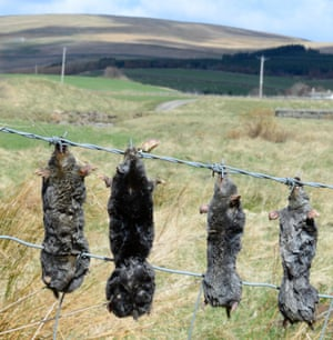 Mole gibbet in Upper Teesdale, Co Durham