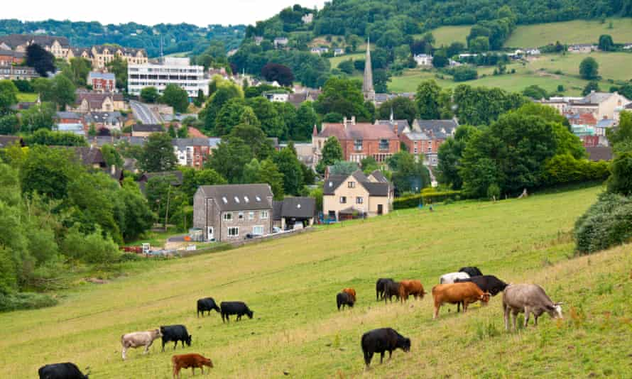 Cows grazing in a field, with Stroud, Gloucestershire, in the background