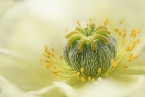 Poppy by Jane Dibnah, Shropshire, United Kingdom