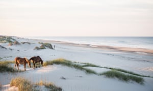 High angle view of horses grazing on field against sky in Corolla, North Carolina