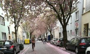 有樱花树的街道,波恩。
