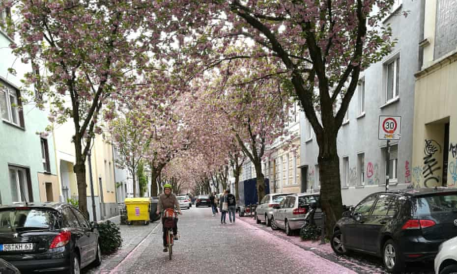 Street with cherry blossom trees, Bonn.