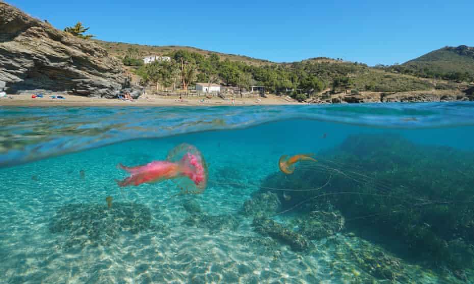 Jellyfish off the coast of Roses, Costa Brava, Spain