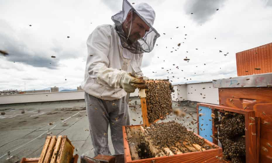 Urban beekeeper Gorazd Trusnovec inspects beehives on the rooftop of the Ljubljana Secondary School of Trade