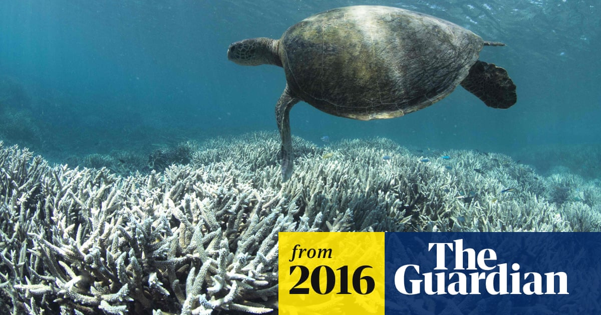 Australia scrubbed from UN climate change report after government