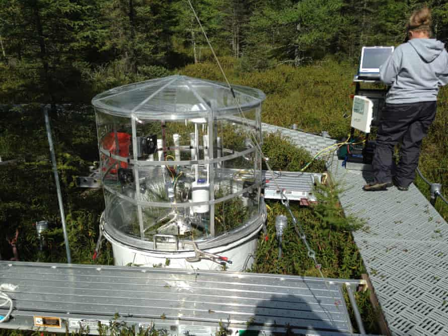 Periodic shrub, sphagnum, and peat community-level measurements of CO2 and CH4 are assessed from 1.2m-diameter in situ collars left in the experimental plots for seasonal and treatment response evaluations