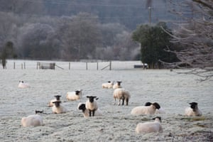 Sheep graze in a frost-covered field in Newnham Bridge, Worcestershire, after one of England's coldest nights of the autumn so far this year