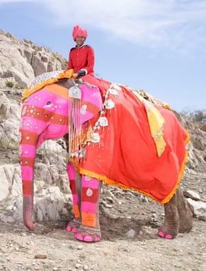 Painted Elephants India