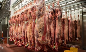 Beef carcases hanging in a UK abattoir.