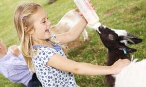bottle feeding goat kids, Cotswold Farm Park