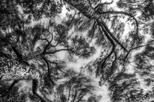 Branches In The Wind, by Sage Cartwright, was one of the talented entries in the student category at Head On photo festival 2017. 'I enjoyed doing something I'd never done before to get this image – setting up my tripod in a tree', Cartwright noted.