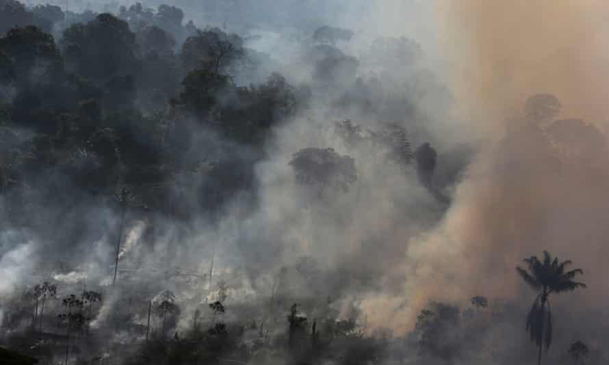 amazon rainforest deforestation brazil