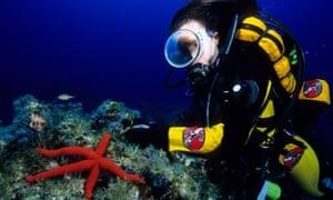 A scuba diver and sea star
