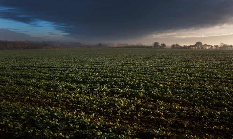 Barometric reading ...a storm approaches over a field of sugar beet.