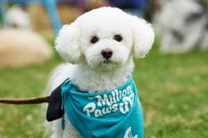 Thousands of dogs and their owners will raise money in the RSPCA's Million Paws Walk 2018.