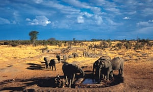 Elephants gather at Big Toms waterhole in Hwange national park, Zimbabwe