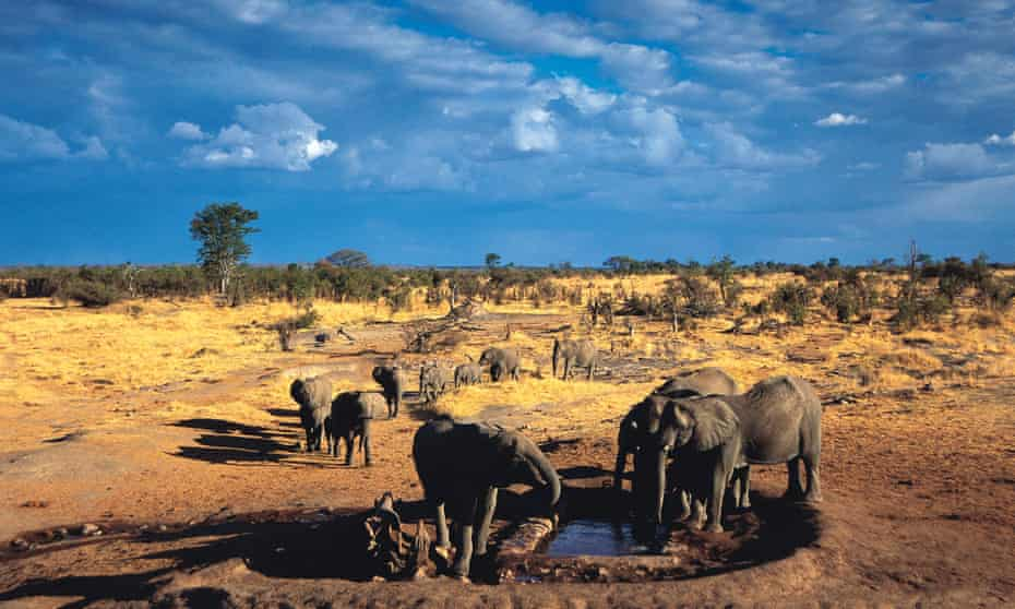 Elephants gather at Big Toms waterhole in Hwange national park, Zimbabwe