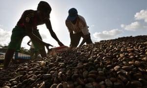 Cocoa Ivory Coast