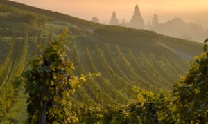 Morning light: dawn over a vineyard in Alsace.