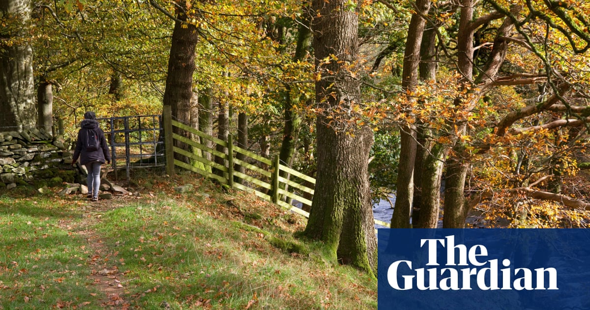 Woods for wildlife and people get £16m funding boost in England