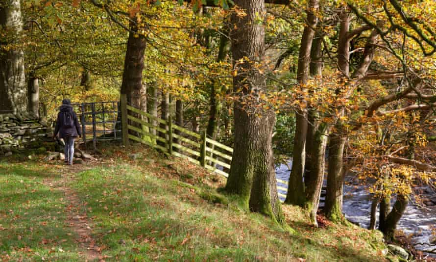 Support for planting trees along rivers to improve waterside habitats will be offered for the first time.