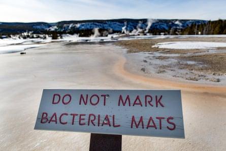 Sign says 'do not mark bacterial mats'