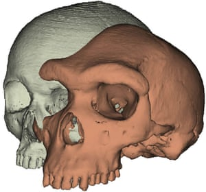 A computer generated model of a modern skull next to the heavy-browed skull of ancient hominin Kabwe 1.