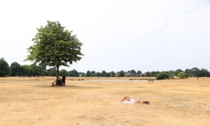 A woman sunbathes on the burnt dry grass on Wimbledon Common in London, caused by a prolonged summer heatwave, July 2918