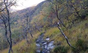 The climb through autumn birch woods.