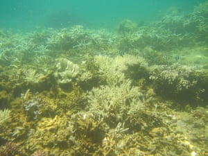 3b072fc6dc10 Devastating global coral bleaching event could hit Great Barrier Reef next