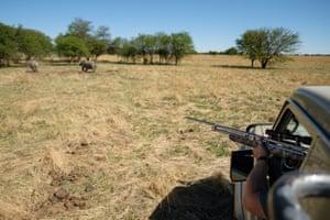 Veterinarian Michelle Otto prepares to fire a tranquiliser dart at a rhino.