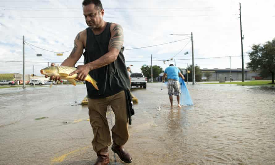 A man catches a carp in the middle of Brittmoore Park Drive in west Houston after the Addicks Reservoir overflowed.