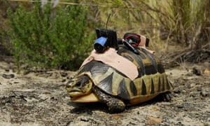 A tortoise cam on an angulate tortoise used for Attenborough's epic overview of life on Earth.
