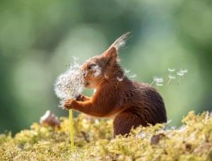 Squirrel Wishes