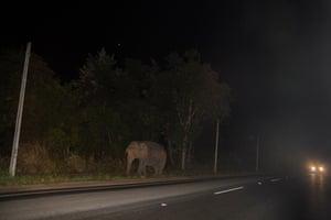 An elephant eats on the roadside