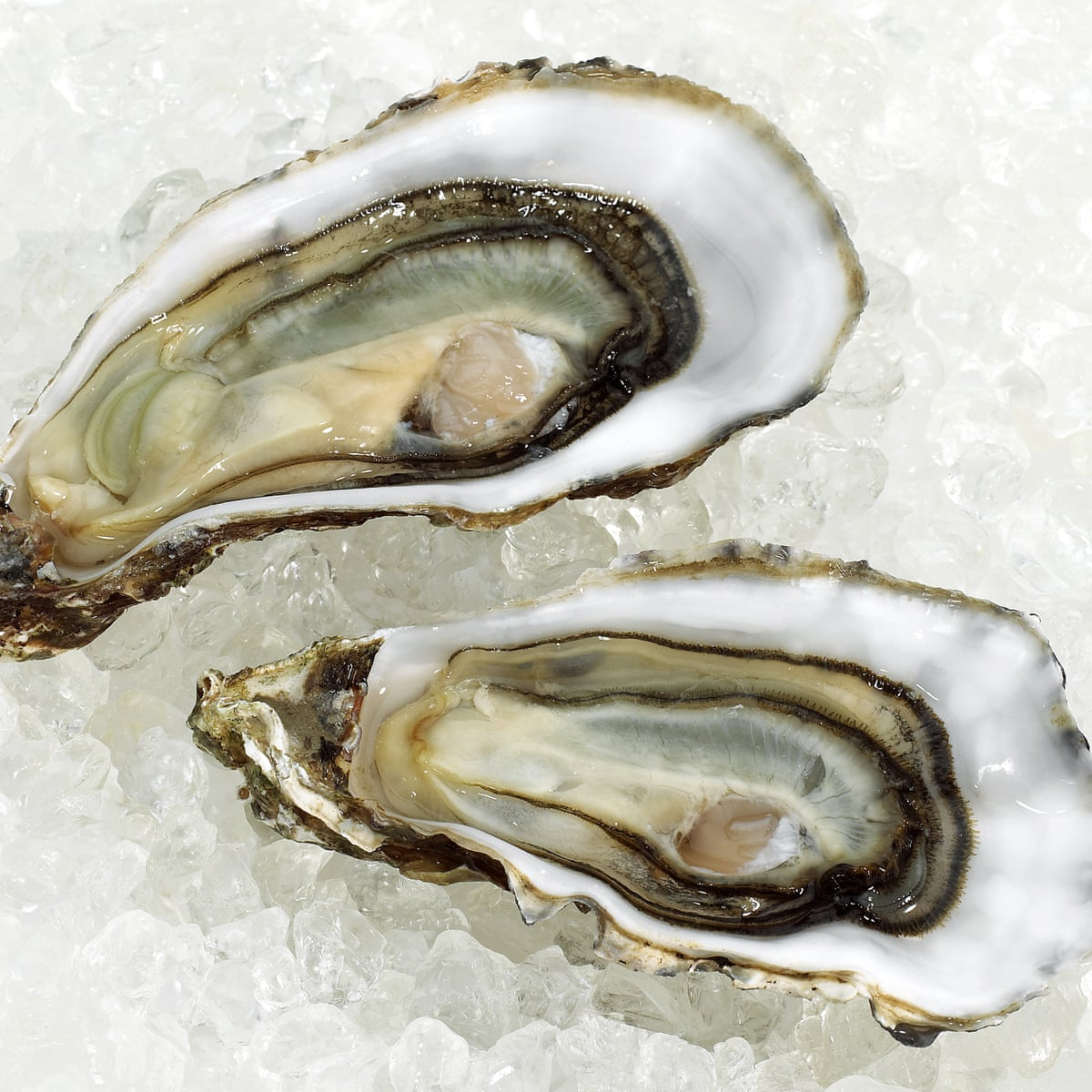 If seven in 10 oysters have norovirus, should we still be eating them?    Oysters   The Guardian