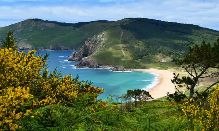 Gorse fringing the track down to Praia do Mar de Fora on the Camiño dos Faros, Galicia, Spain.