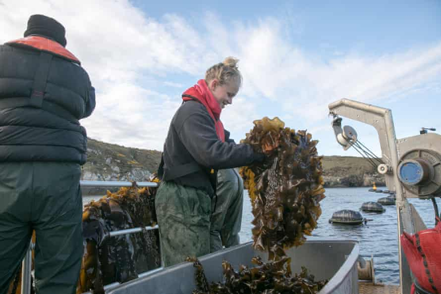 Rosie Rees works at the seafood processing centre and volunteers at the seaweed farm, where she enjoys sharing her knowlegde with new volunteers.